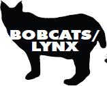 Bobcats and Lynx
