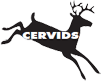 Cervid