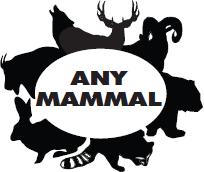Any Mammal