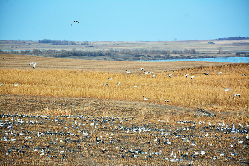 Drift Prairie