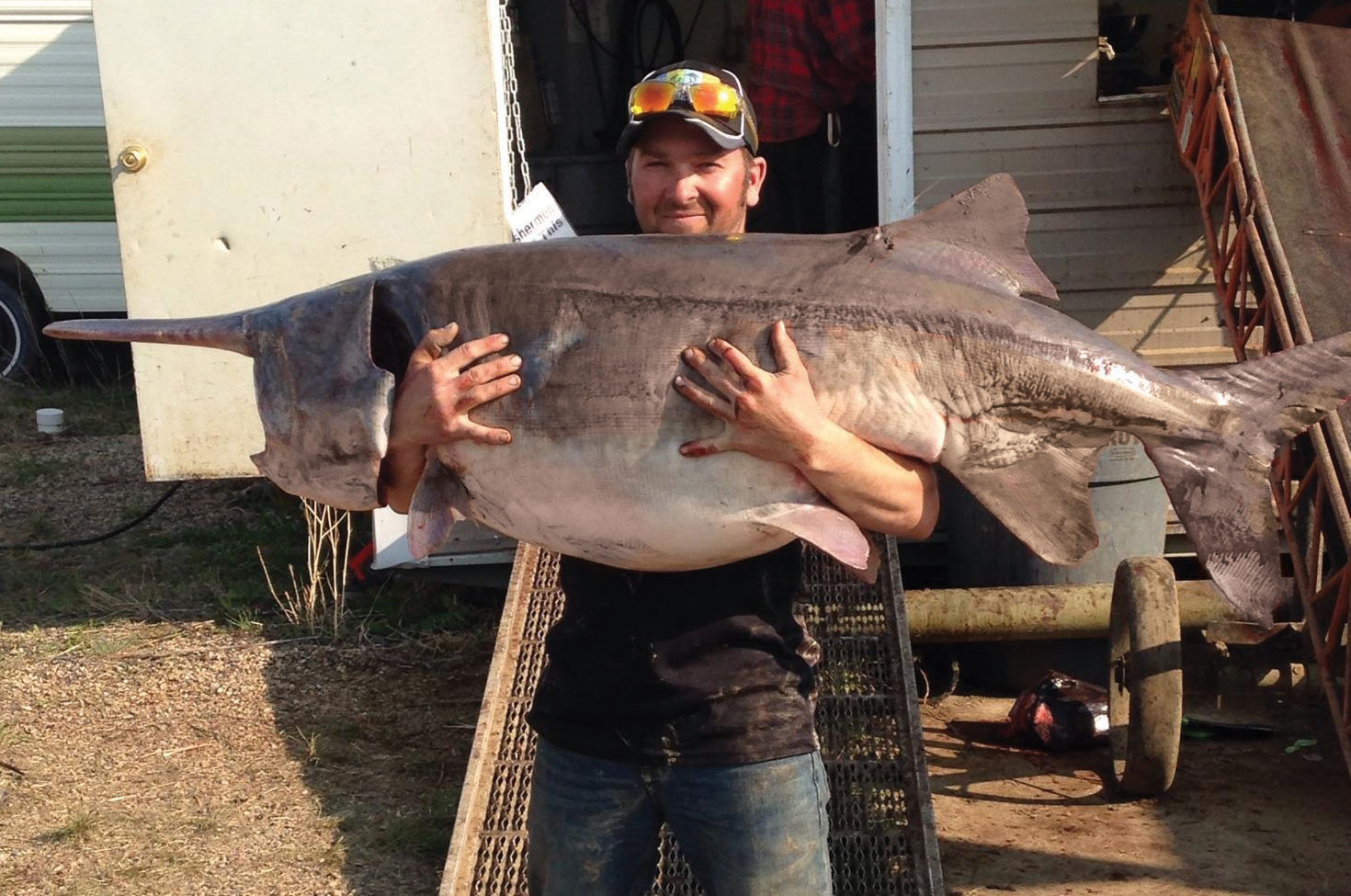 A state record paddlefish weighing 131 pounds and measuring 71 inches snagged near the Confluence in 2016.
