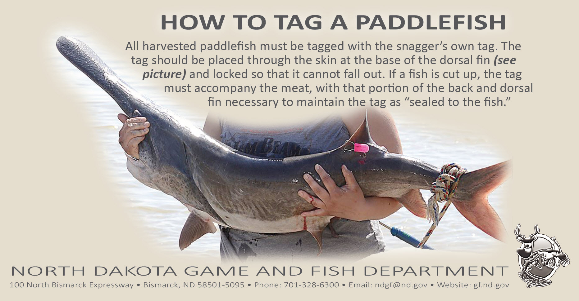 Paddlefish snagging season north dakota game and fish for North dakota fishing license