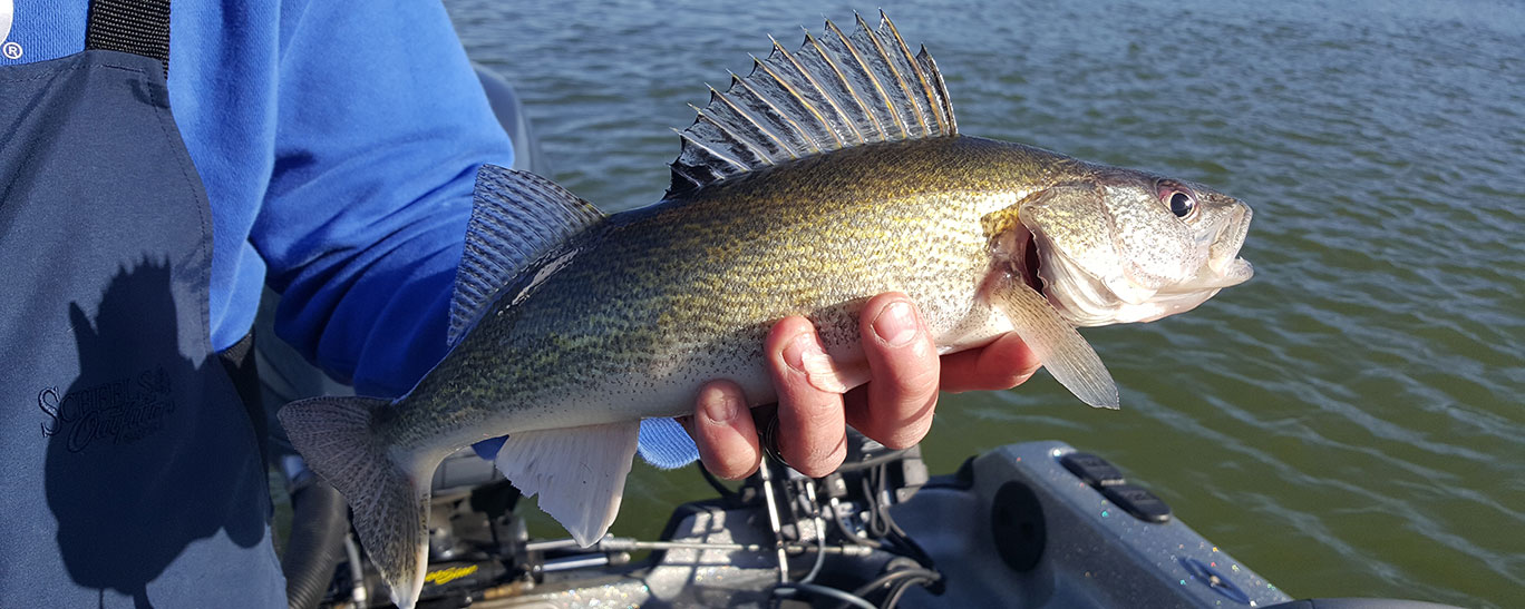 Slots and closing spring seasons for Walleye fishing in missouri