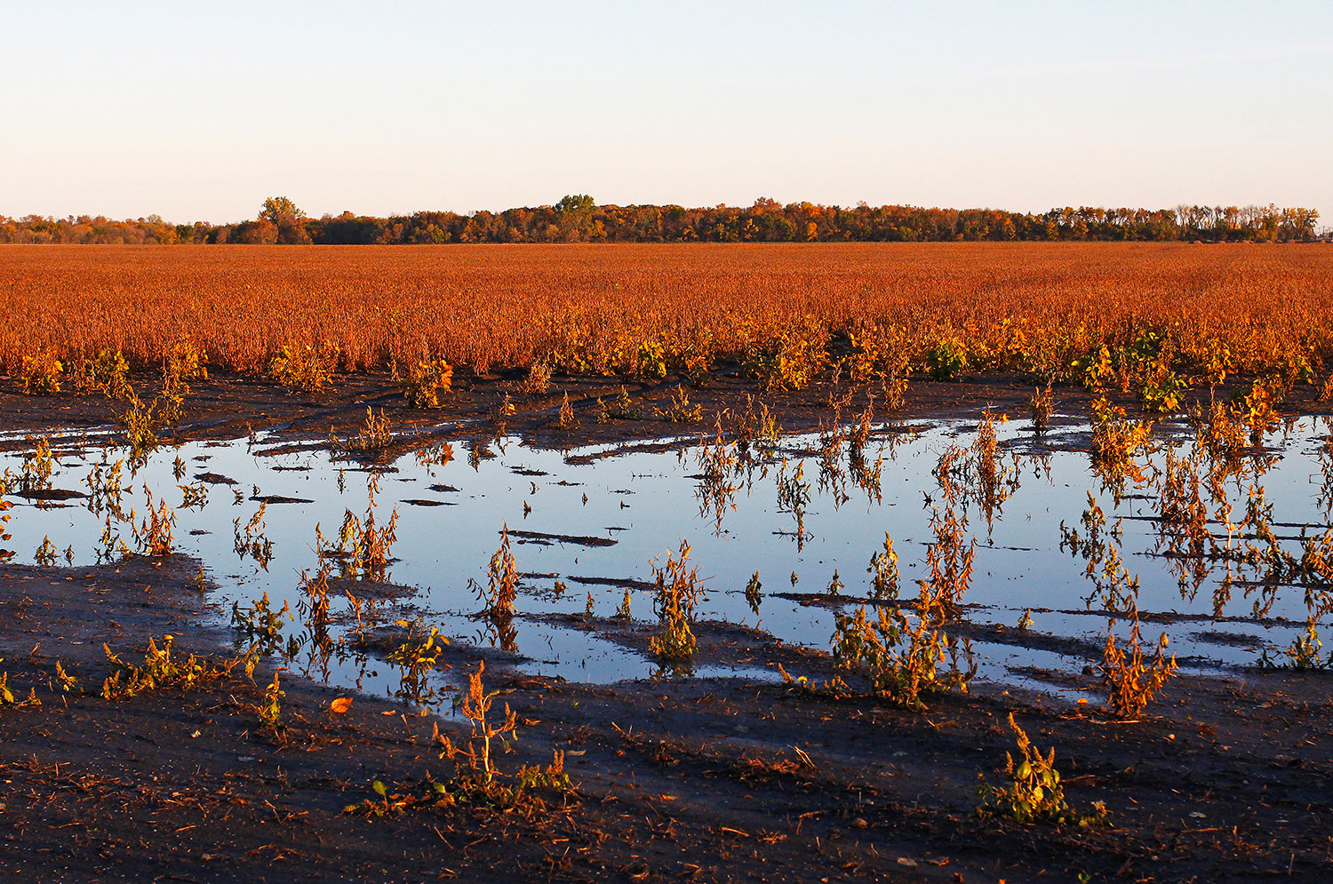Standing water in crop field
