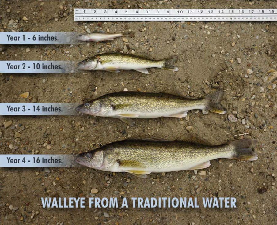 Fish of different sizes - 1