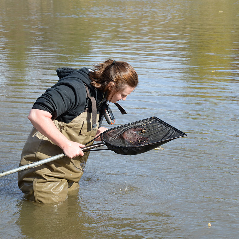 Biologist looking for zebra mussels