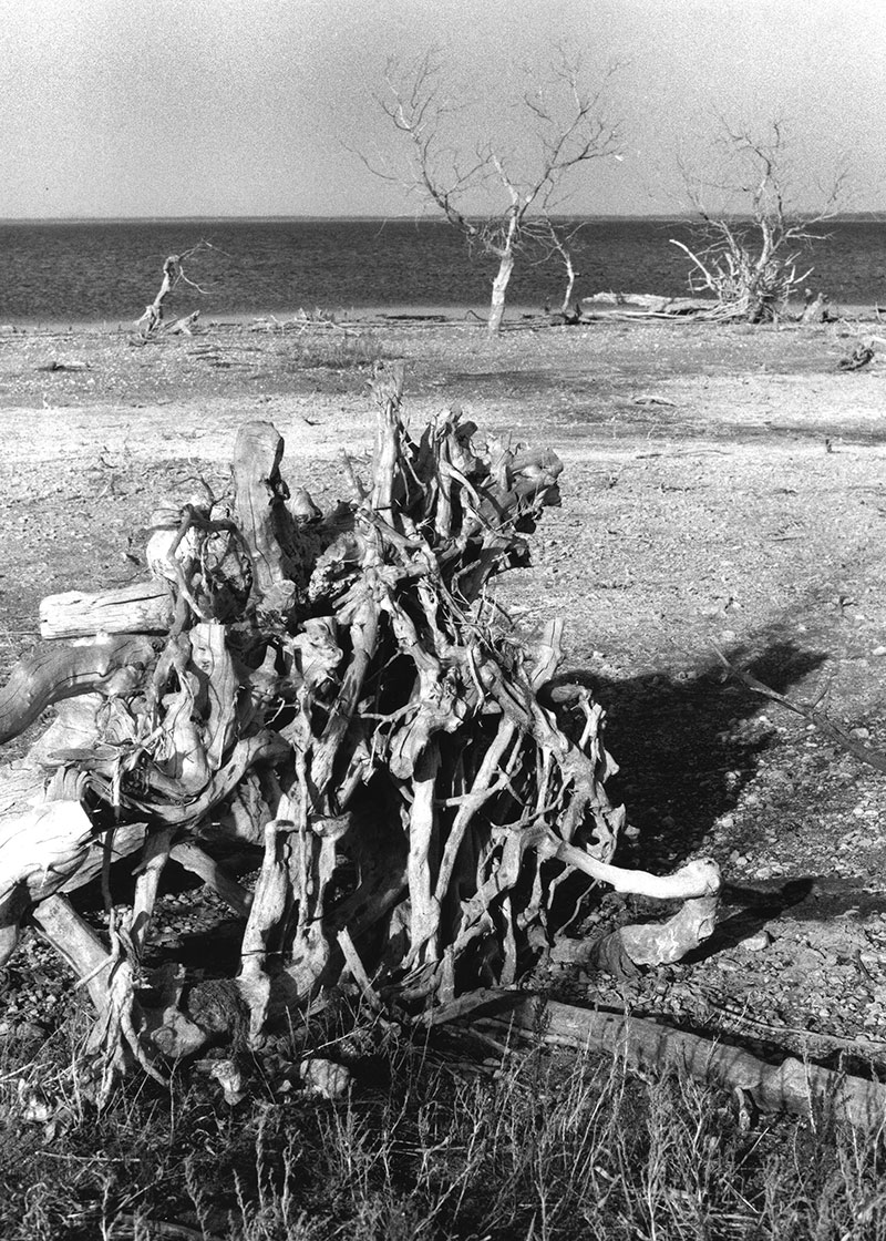 Dead wood on dry shore
