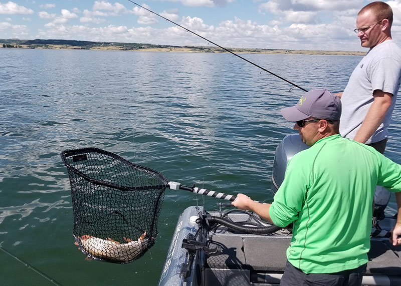 Anglers netting fish