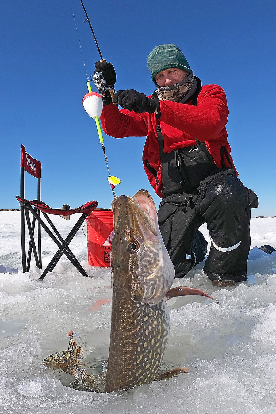 Angler pulling pike from ice hole