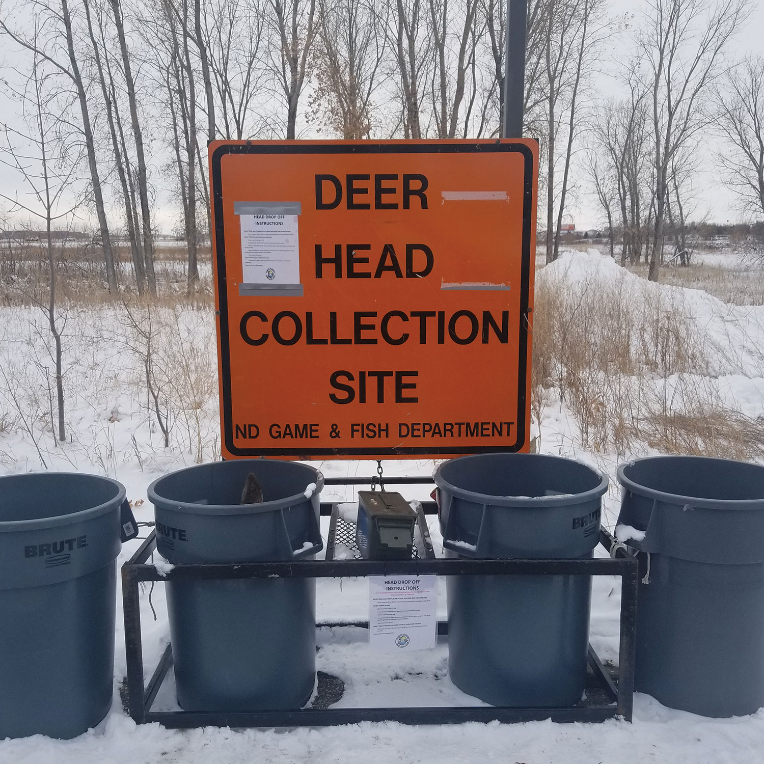 Deer head collection site