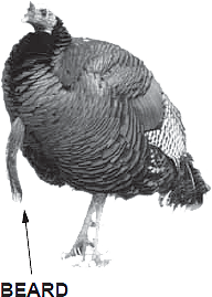 Spring Turkey Hunting Guide North Dakota Game And Fish