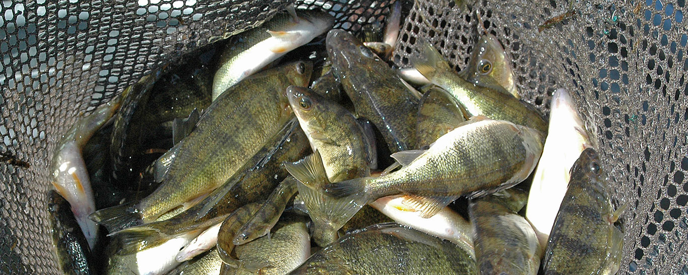 2016 fish stocking report north dakota game and fish ForNd Game And Fish Stocking Report