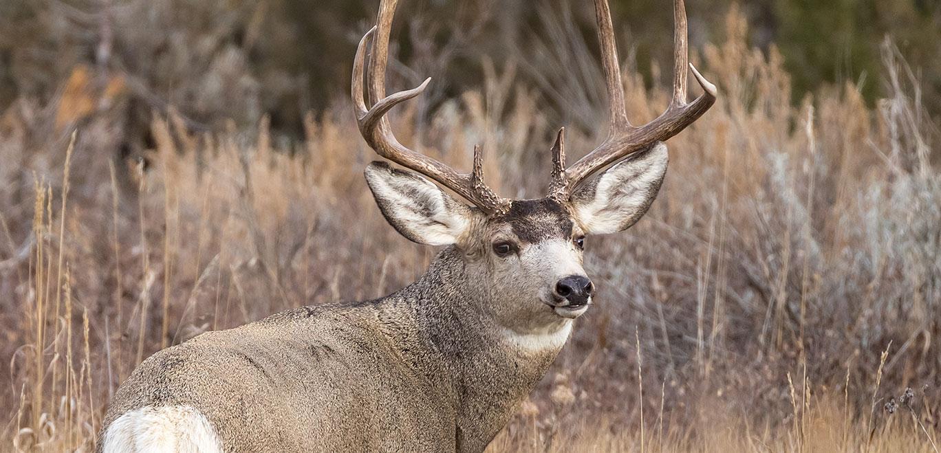 2017 deer drawing north dakota game and fish