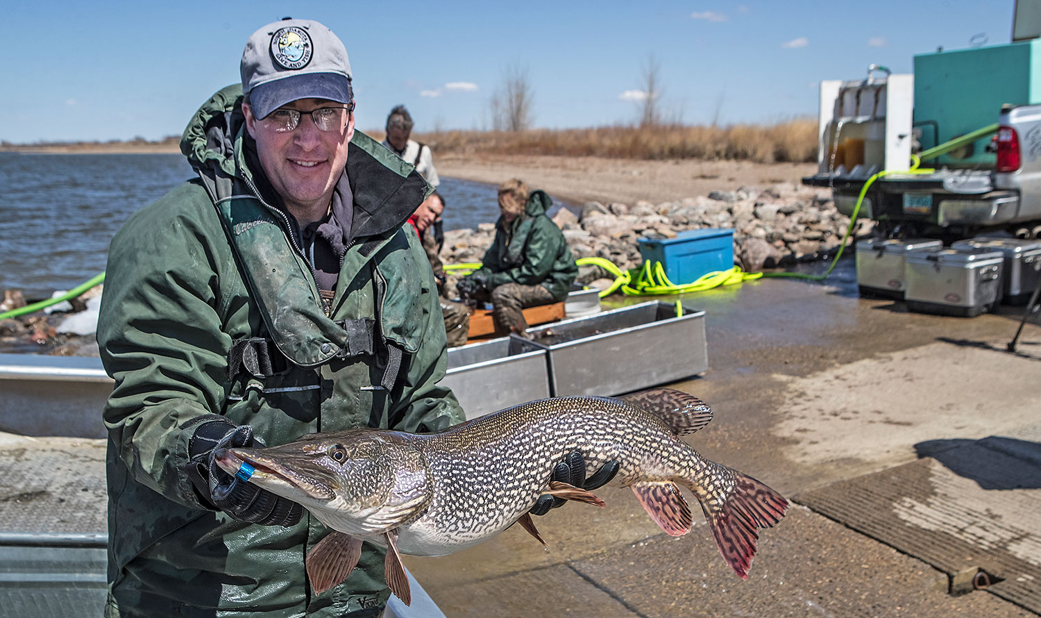 Fisheries biologist holding northern pike