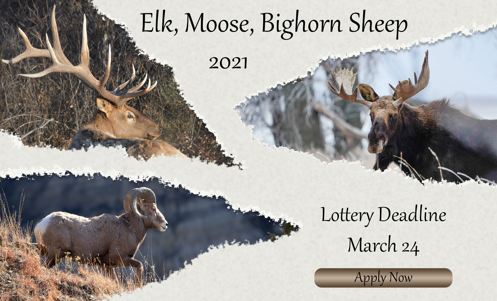 Elk, moose, sheep with deadline text overlayed