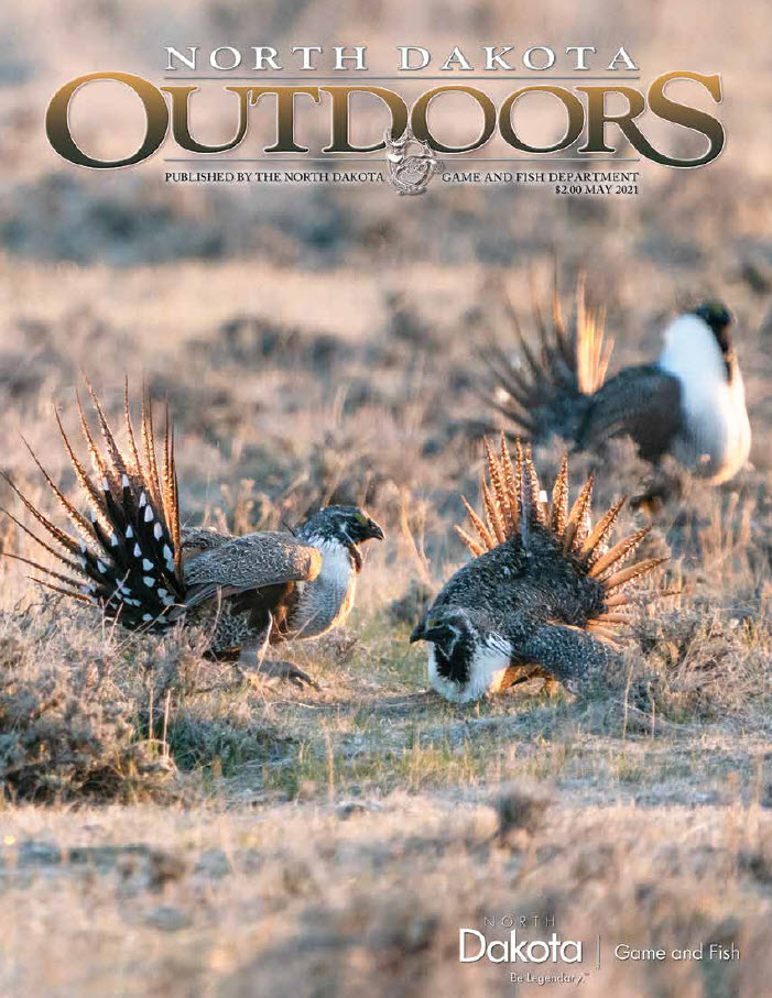 May 2021 NDO Cover - Sage-grouse lek