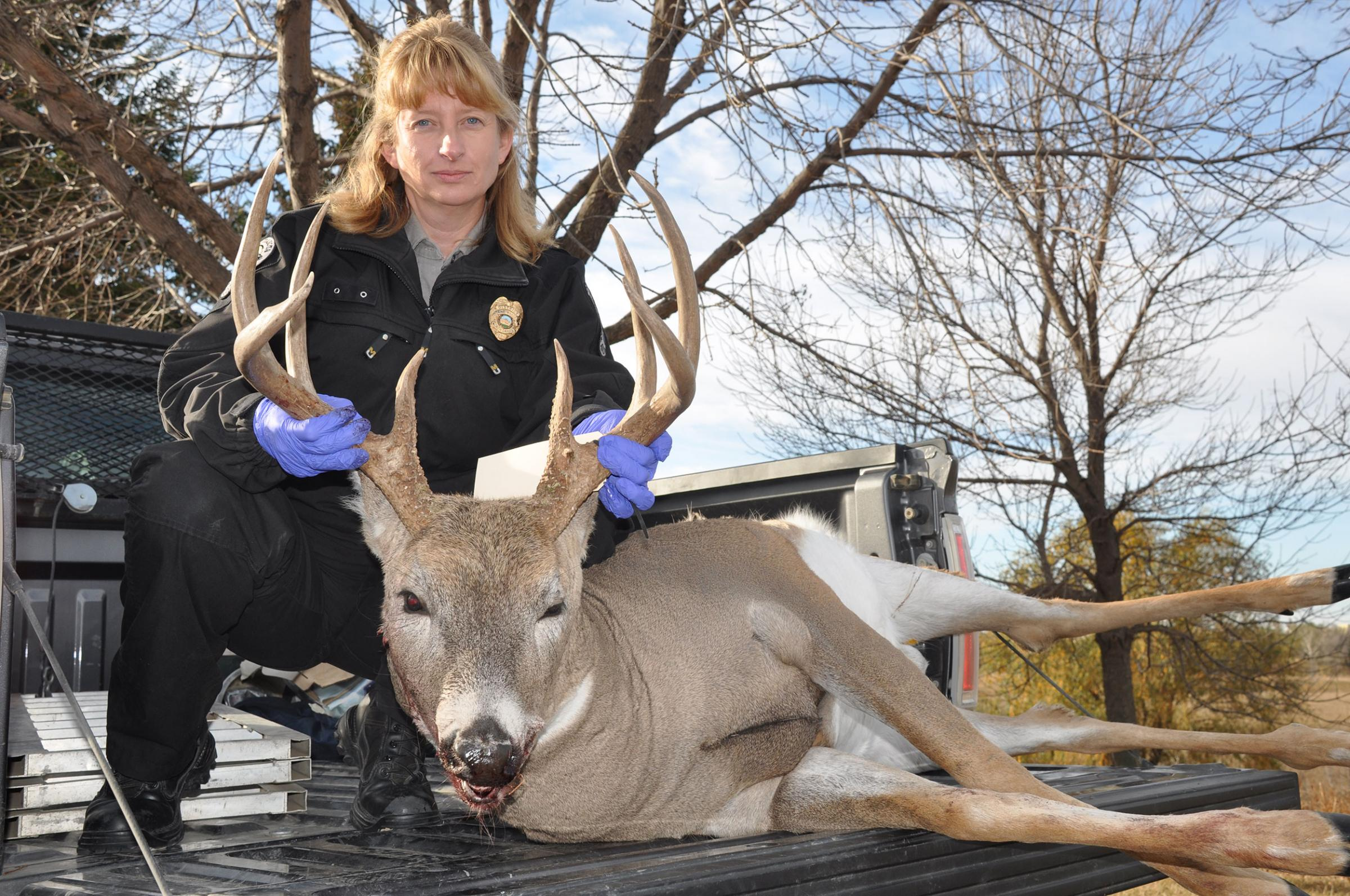 Jackie Lundstrom, Department enforcement division operations supervisor, with a dandy whitetail buck shot by poachers in Burleigh County.