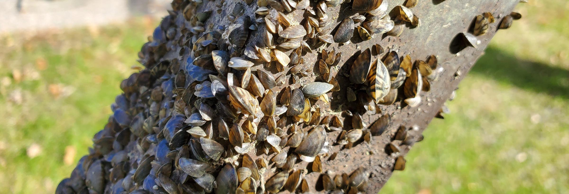 A boat lift covered in zebra mussels that was pulled this fall from Lake Ashtabula.