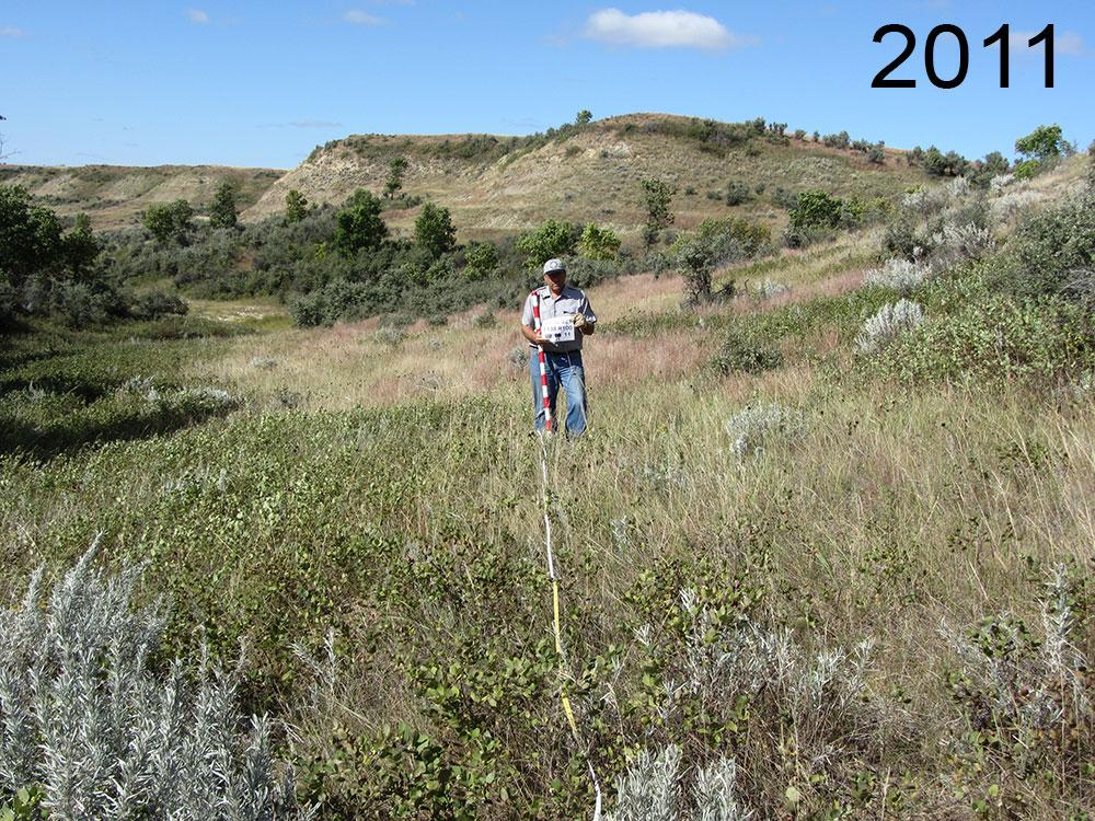 Transect in 2011