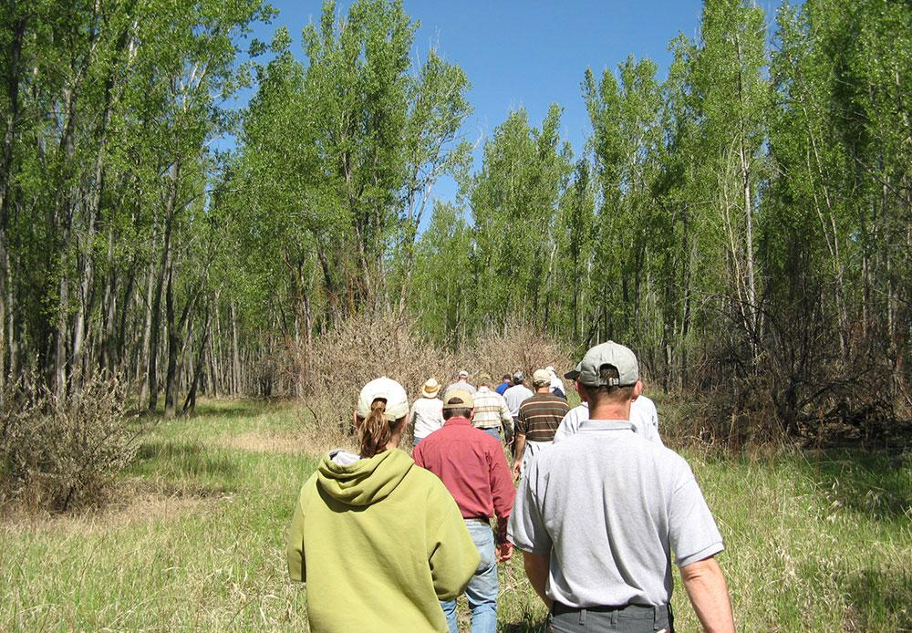 Group viewing riparian area