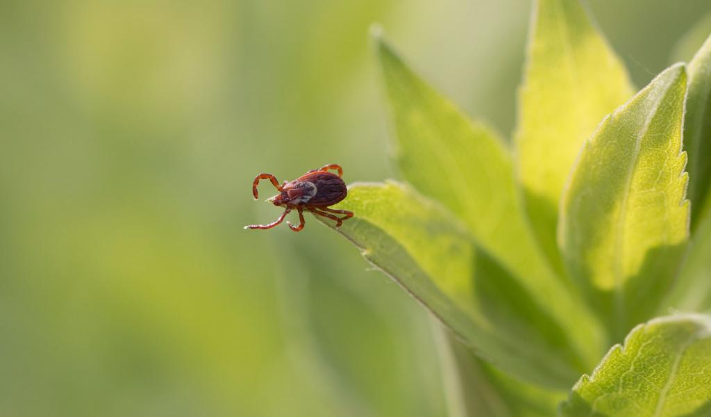 And just a reminder, for all that spring is a beautiful season, it is also the prime season for ticks. So watch out for these little critters hanging off brush and tall grasses, waiting for a meal to walk by.