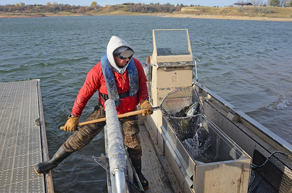When the tank on the boat is full, they head back to the ramp – this one is at Rodeo Bay within Lake Sakakawea State Park.