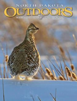 Cover - Sharp-tailed grouse