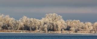 Frost on trees along Missouri River