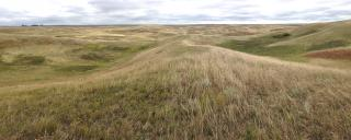 Mixed-grass Prairie