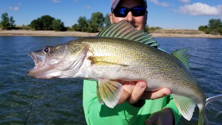 Home north dakota game and fish for North dakota fishing