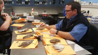 Staff identifying bird wings