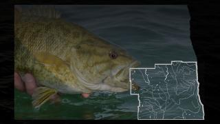 Fish with map of SE district overlay